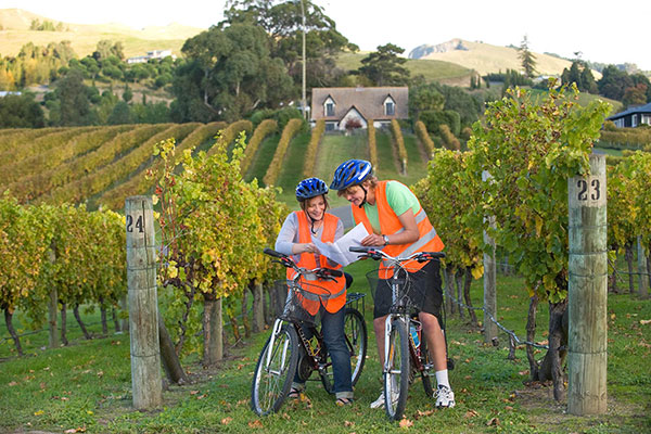 napier bike hire and winery tours